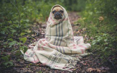 Meditatiehouding